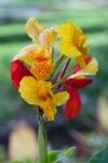 A lovely flower in the park