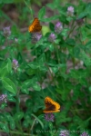 Butterflies at the falls