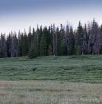 Moose Glimpse