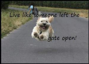 Live-Gate Open