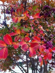 A little of Autumn