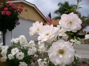Roses & Flag