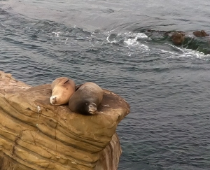 Seals Relaxing-2