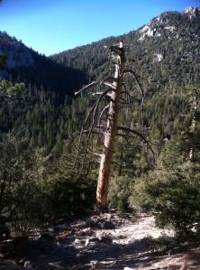 Beautiful Tree 2