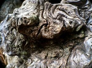Bark 23
