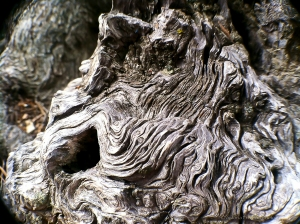 Bark 5