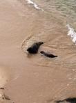 Mama & Baby Seal 1