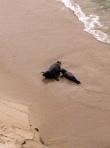 Mama & Baby Seal