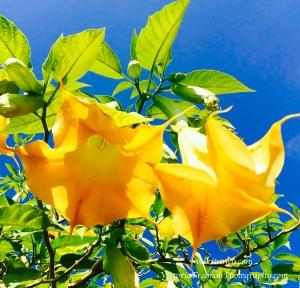 Getty flower tree